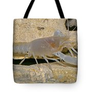Orange Lake Cave Crayfish Tote Bag