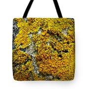 Orange Lichen - Xanthoria Parietina Tote Bag