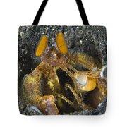 Orange Mantis Shrimp In Its Burrow Tote Bag