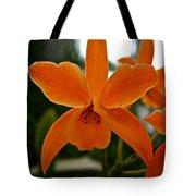 Orange Sherbert  Orchid Tote Bag