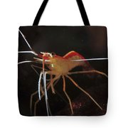 Orange White And Red Shrimp, Bali Tote Bag