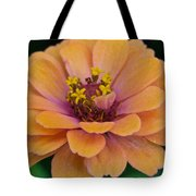 Orange Zinnia_9475_4267 Tote Bag