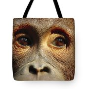 Orangutan Eyes Borneo Tote Bag