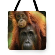Orangutan Pongo Pygmaeus Female Tote Bag