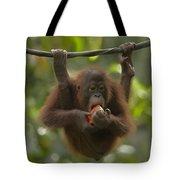Orangutan Pongo Pygmaeus Young Eating Tote Bag