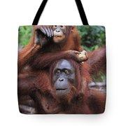 Orangutans Tote Bag
