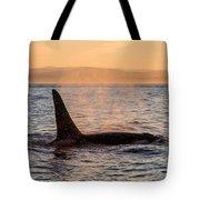 Orca At Sunset Tote Bag