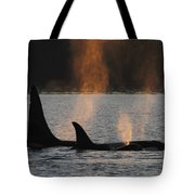 Orca Orcinus Orca Resident Pod Tote Bag