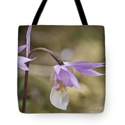 Orchid Calypso Bulbosa - 1 Tote Bag