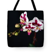 Orchid Flowers Against Black Background Tote Bag