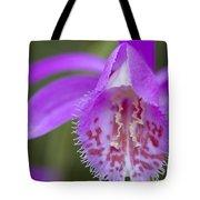 Orchid Pleione Bulbocodioides Flower Tote Bag