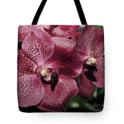 Orchid Vanda And Ascocenda Hybrid II Tote Bag