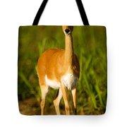 Oribi Ewe Tote Bag