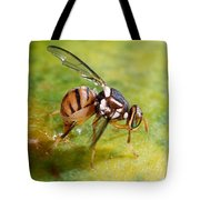 Oriental Fruit Fly Laying Eggs Tote Bag