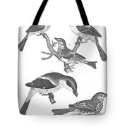 Ornithology, 19th Century Tote Bag