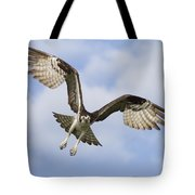 Osprey In Flight One Tote Bag