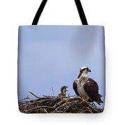 Osprey Mother And Chick Tote Bag