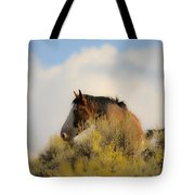 Over The Hill Pinto Tote Bag