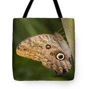 Owl Butterfly Caligo Idomeneus Resting Tote Bag