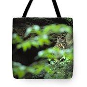 Owl In Woodland, Sachsische Schweiz Tote Bag