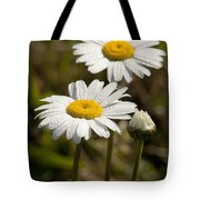 Ox-eye Daisy Wildflowers Drenched In Dew Tote Bag