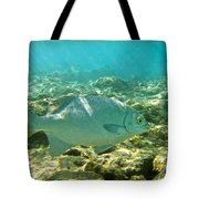 Pacific Chub 1080113.jpg Tote Bag