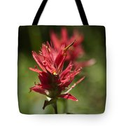 Painted-cups Of The Hillside - 4 Tote Bag