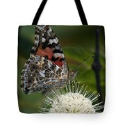 Painted Lady Butterfly Din049 Tote Bag