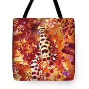 Pair Of Coleman Shrimp On A Red Tote Bag