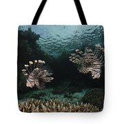 Pair Of Lionfish, Indonesia Tote Bag