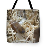 Pair Of Transluscent White Snapping Tote Bag