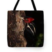 Pale-billed Woodpecker Tote Bag
