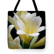 Pale Yellow Clivia Miniata Flowers Tote Bag