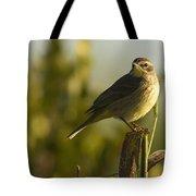 Palm Warbler, Everglades National Park Tote Bag