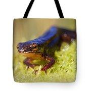 Palmate Newt  Tote Bag
