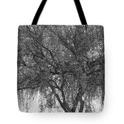 Palo Verde Tree 2 Tote Bag