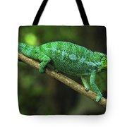Panther Chameleon Chamaeleo Pardalis Tote Bag