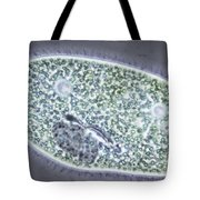 Paramecium Bursaria Tote Bag by M. I. Walker
