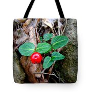 Partridge Berry Berry - Mitchella Repens Tote Bag