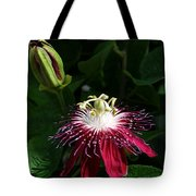 Passion Flower Tote Bag by Eva Kaufman
