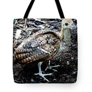 Peacock Baby Tote Bag