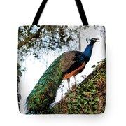 Peacock Calling Tote Bag