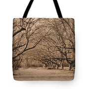 Pecan Orchard Tote Bag