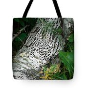 Pecked Birch Tote Bag