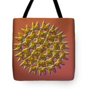 Pediastrum Sp. Algae, Lm Tote Bag