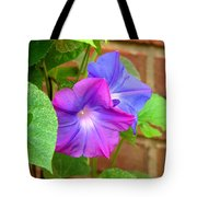 Peek-a-boo Morning Glories Tote Bag