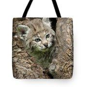 Peeking Out - Bobcat Kitten Tote Bag