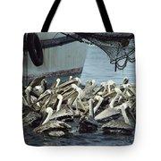 Pelicans Float In Water Near A Shrimp Tote Bag