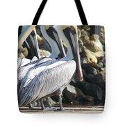 Pelicans Of Keaton Beach Canal Tote Bag