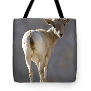 Peninsular Bighorn Sheep Ovis Tote Bag